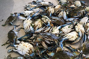 Appetite For Gulf Seafood Is Back, But The Crabs And Oysters Aren't