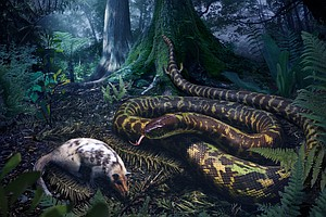Earth's First Snake Likely Evolved On Land, Not In Water