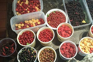 Urban Food Forests Make Fruit Free For The Picking