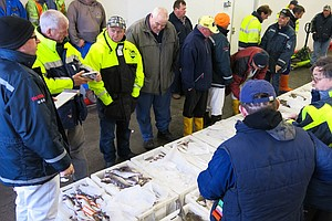 Cod Comeback: How The North Sea Fishery Bounced Back From...