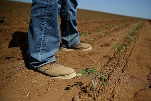 Drought May Cost California's Farmers Almost $3 Billion I...
