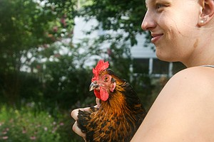 Chicken Owners Brood Over CDC Advice Not To Kiss, Cuddle ...
