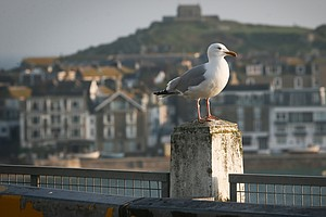 U.K. Prime Minister Wants 'Big Conversation' About Seagull Attacks