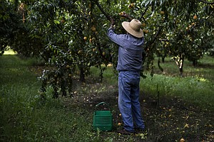 For Greece's Farmers, Growing Pressure To Be More Competi...