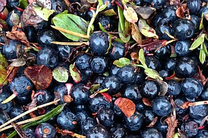 Asian Countries Have Nordic Berry Fever, And Finland Can'...