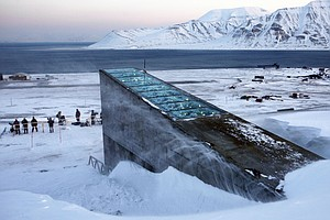 Reclaiming Syria's Seeds From An Icy Arctic Vault