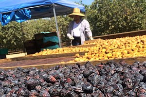 Fancy A Fig? California's Growers Desperately Hope You Do