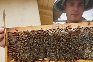 Backyard Beekeeping Approved In Los Angeles