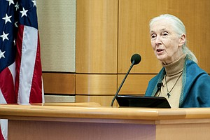 Jane Goodall Wants To Save Us (And Her Beloved Chimps) Fr...