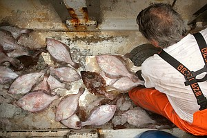 Fish Stocks Are Declining Worldwide, And Climate Change I...