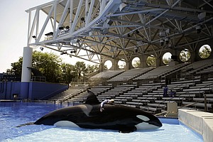 SeaWorld Agrees To End Captive Breeding Of Killer Whales