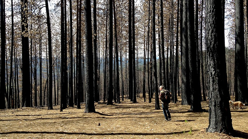 After Fires In West, Mushroom Hunters 'Chase The Burn'   KPBS