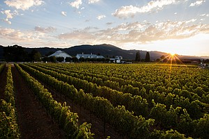 Demystifying Terroir: Maybe Its The Microbes Making Magic...