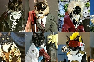 For These Cosplayers, Geeky Costumes Are The Cat's Pajamas