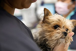 For Vets, Caring For Sick Pets And Grieving Owners Takes A Toll