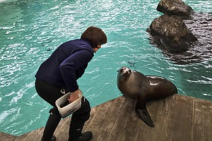 How To Teach A Sea Lion Who's Fussy About Grammar