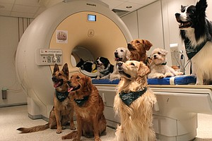Their Masters' Voices: Dogs Understand Tone And Meaning O...