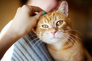 Don't Kiss That Kitty: Cat-Scratch Fever Is Making People...