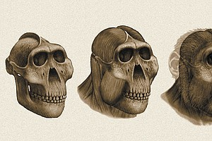 Dental Detectives: What Fossil Teeth Reveal About Ancestral Human Diets