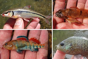 Little Fish Tales: Micro Fishers Focus On The Species, No...