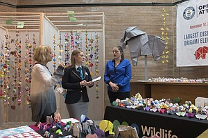 Bronx Zoo Breaks World Record For Largest Display Of Orig...