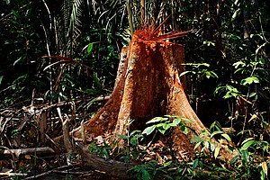 Deforestation Of The Amazon Up 29 Percent From Last Year,...