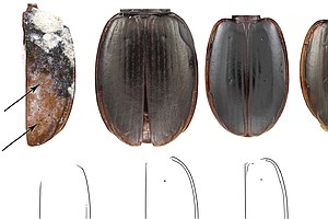 Antarctic Beetle Species Discovery Doubles As Birthday Gift To Scientists' Me...
