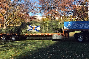Boston's Christmas Tree Tradition Rooted In A Canadian Thank You