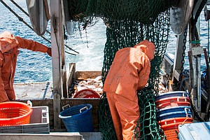 Fishermen Team Up With Scientists To Make A More Selective Net