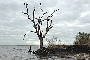 Louisiana History Washes Away As Sea Levels Rise, Land Sinks