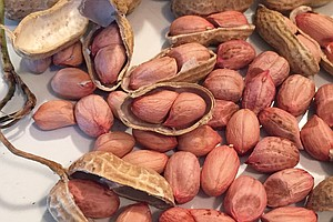 The Lost Ancestral Peanut Of The South Is Revived