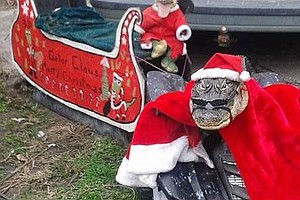 Florida Woman Gets OK To Keep Rambo, Her Clothes-Wearing Gator
