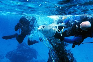 Fishing Rule Aims To Do For All Marine Mammals What It Di...