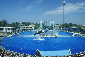 SeaWorld Ends Its Orca Theatrics In San Diego, But Critic...