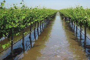 As Rains Soak California, Farmers Test How To Store Water Underground