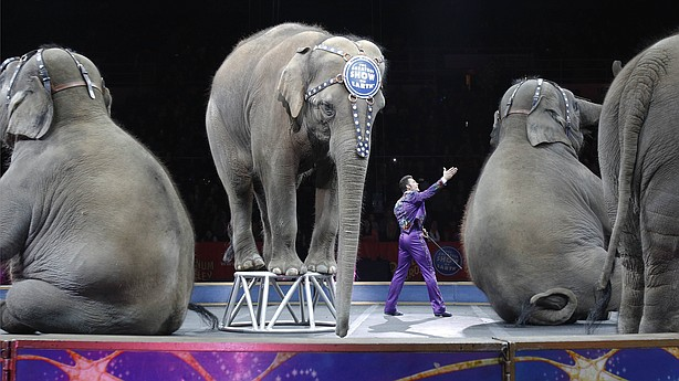 sections thetwo after years ringling bros barnum bailey circus shut down