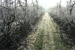 If These Trees Don't Get Time To Chill, Farmers Will Be Out On A Limb