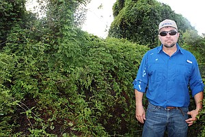 Invasive Fern In Florida Threatens To Take Down More Than Just Trees
