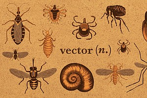 From Vector To Zoonotic: A Glossary For Infectious Diseases