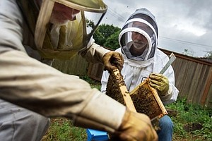 Crop-Protecting Fungicides May Be Hurting The Honey Bees