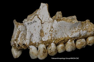 Some Neanderthals Were Vegetarian — And They Likely Kisse...