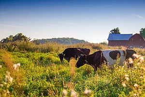 Why More Farmers Are Making The Switch To Grass-Fed Meat ...