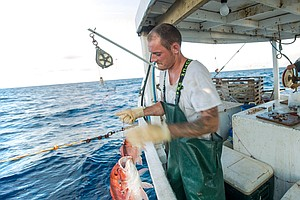 The Race To Fish Slows Down. Why That's Good For Fish, Fi...