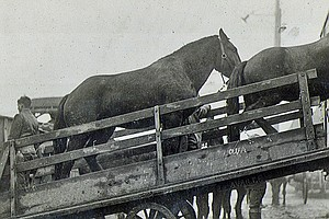 The Unsung Equestrian Heroes Of World War I And The Plot To Poison Them