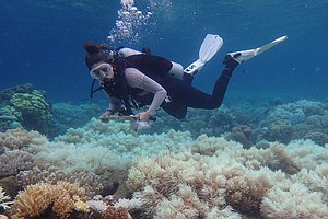 Great Barrier Reef Hit By Bleaching For The Second Year I...