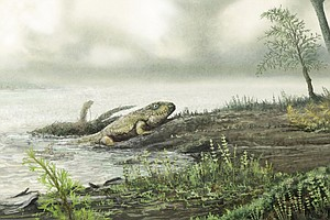 Superbugs 'Crawled Out' Of The Ocean 450 Million Years Ago