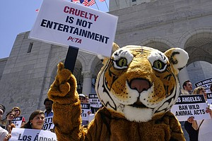 Ringling Bros. Curtain Call Is Latest Victory For Animal ...