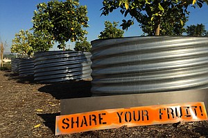 This Art Group Installs Pick-Your-Own-Fruit Parks Around Los Angeles
