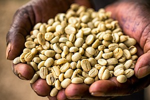 Ethiopia's Coffee Farmers Are 'On The Front Lines Of Clim...