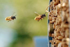 Pesticides Are Harming Bees — But Not Everywhere, Major N...